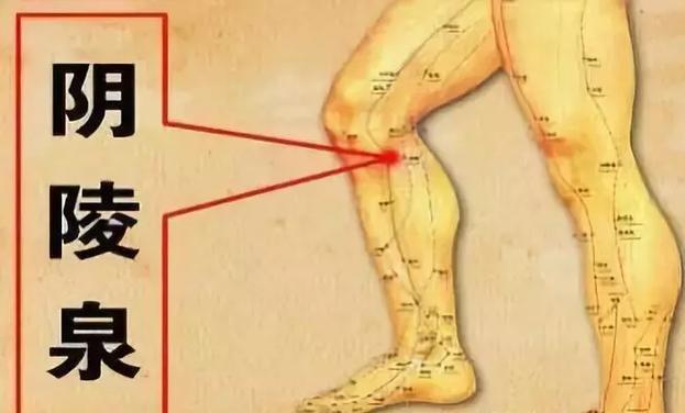 可以先按摩脾經的陰陵泉穴。另外,按摩胃經的頭維穴也可緩解。
