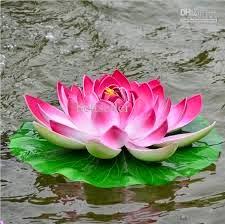 Healthdisease And Genetics Lotus Flower Medicinal Value