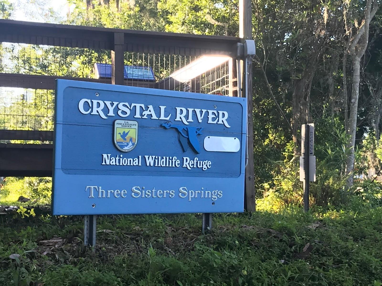 crystal river manatee kayak 2