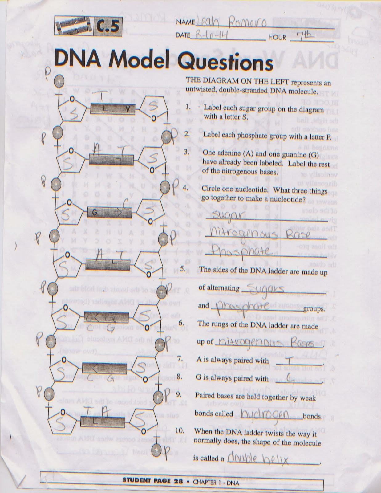 Chromosome Quiz Leah 39s Biology Blog Models Of Dna Structures