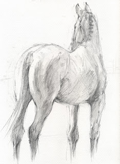 ShowGirl, equestrian art, horse drawing, graphite horse drawing