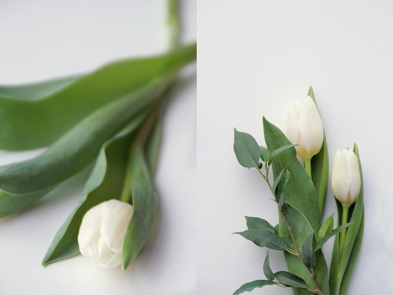 Styling und Fotografie mit weißen Tulpen - Frühlingsboten im Januar | Tasteboykott