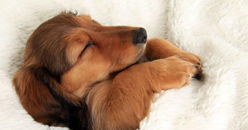 Γιατί τα σκυλιά τρέμουν στον ύπνο τους;