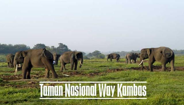 Taman Nasional Way Kambas