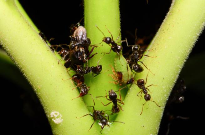 نمل يتسلق العشب بحثا عن الغذاء
