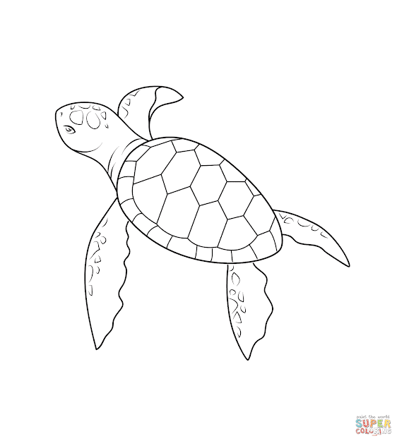 Click The Baby Turtle Coloring