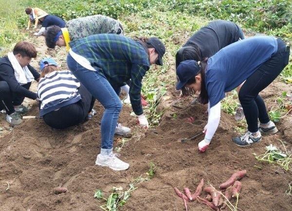 Kinh nghiệm du học sinh Việt Nam làm vườn kiếm thêm thu nhập tại Hàn Quốc