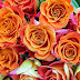 { Beautiful }Orange Roses Images Pics Wallpaper Photos Bouquet in HD FREE Download