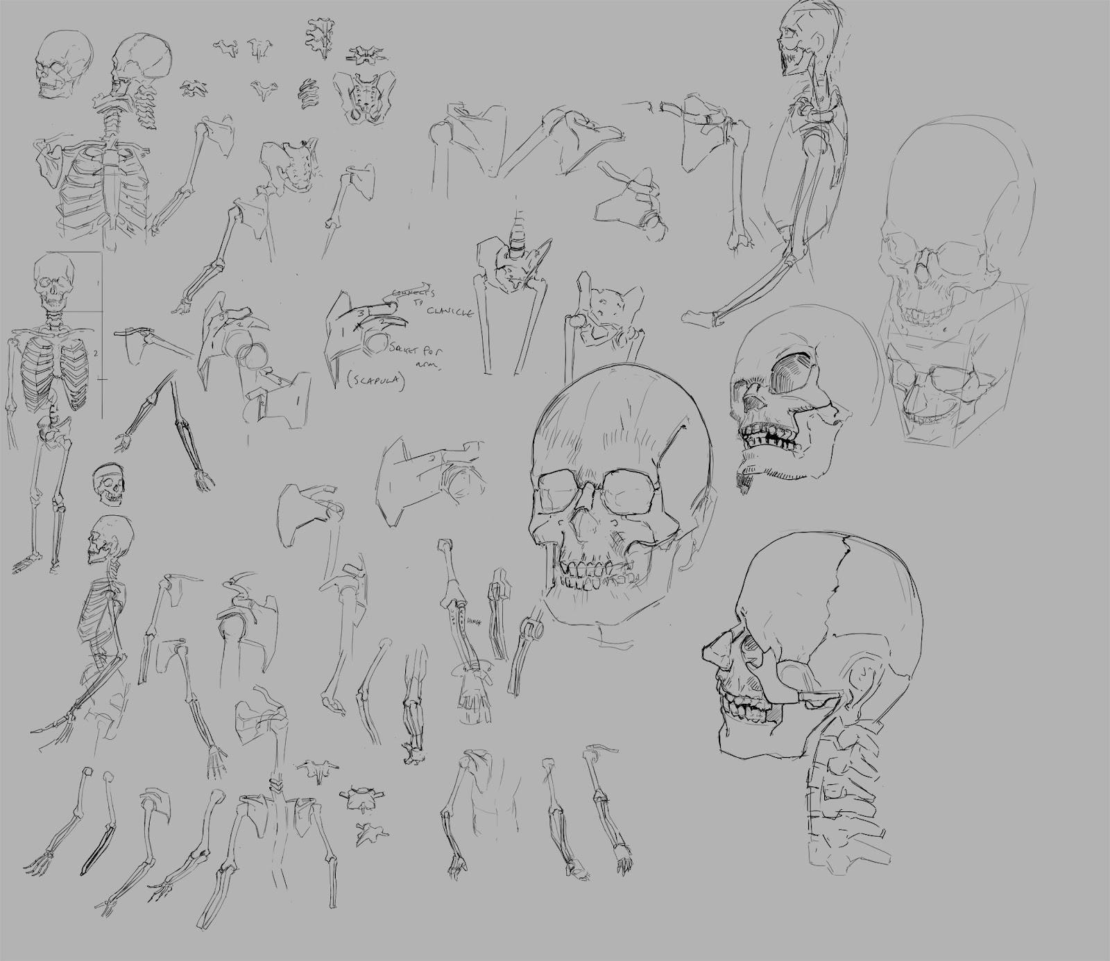 [Image: skeletonstudies.jpg]