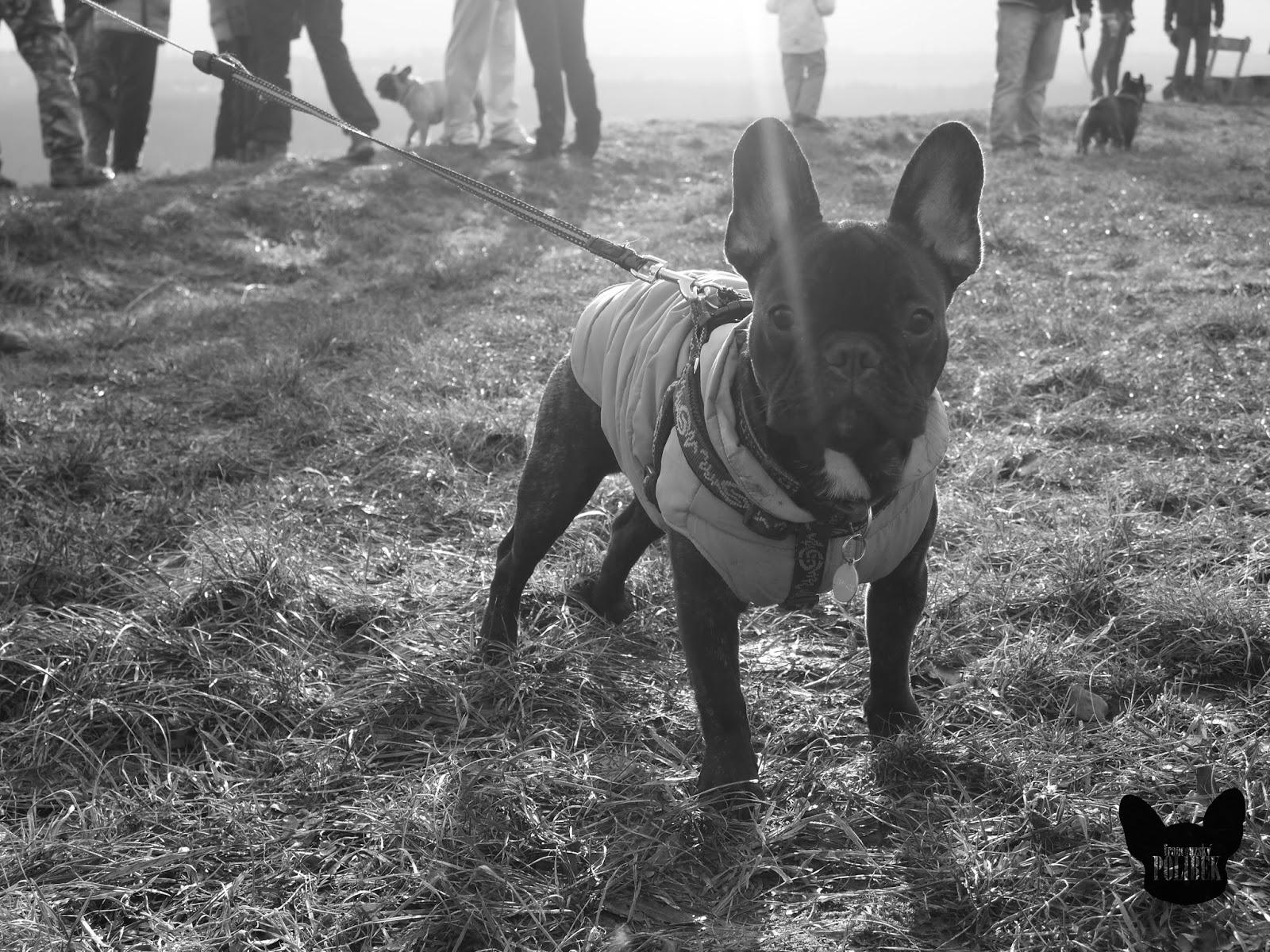 procházka se psy