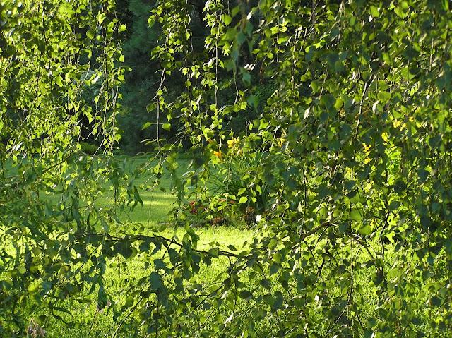 przesłona w ogrodzie