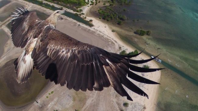 20 крутых фото сделанных дронам