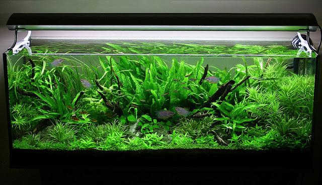 Aquarium untuk Aquascape