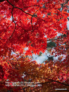 初冬の紅葉 2写真