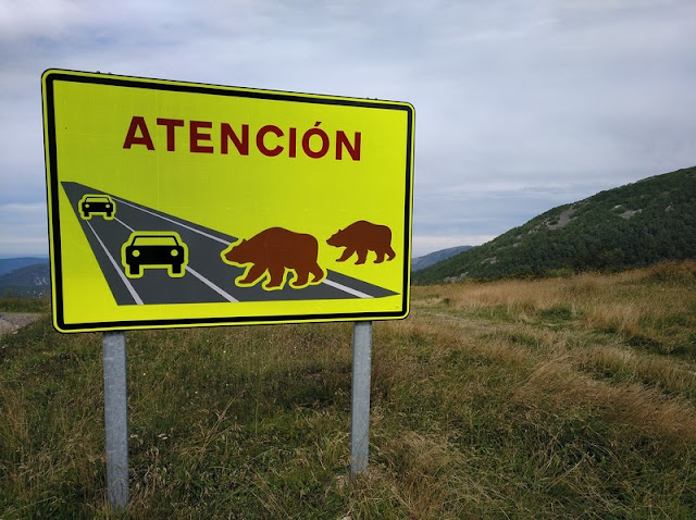 Cuidado con los osos al conducir por la Reserva de Muniellos