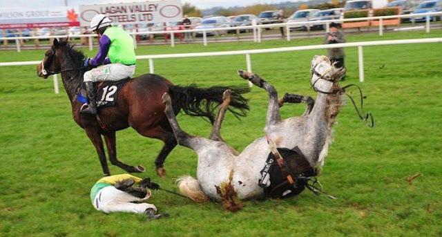 """فيديو  لهذا السبب تُقتل الخيول عند كَسْرِ ساقها لماذا تعتبر """"ساق مكسورة"""" عبارة مميتة بالنسبة للخيول"""