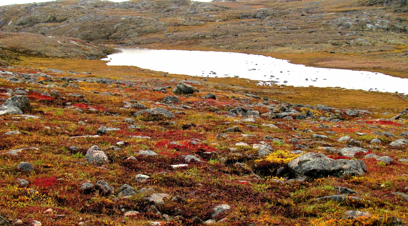 #Tundra, Vegetação Típica das Regiões Polares