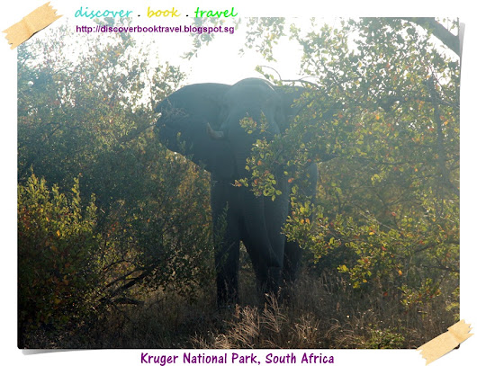 Kruger National Park Safari Day 2