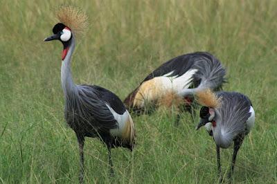 Birding in Lake Mburo national park, Birding safaris in Lake Mburo national park