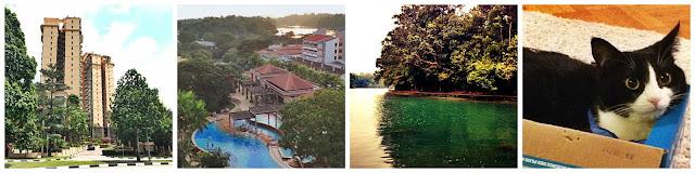 housesit singapore