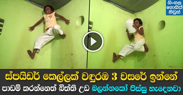 Spider girl in Wanduramba - Amazing Video Must Watch