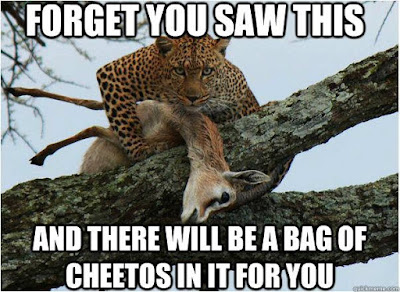 Cheetah taking to gazelle