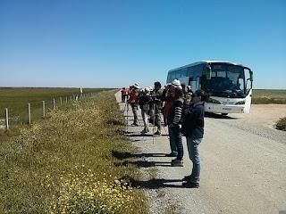 Curso taller Aves del entorno de Doñana 2017. Grupo Local SEO-Sevilla.