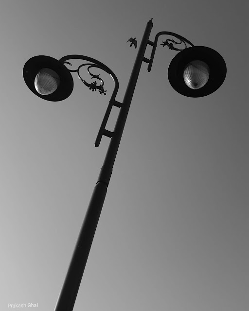 A Black and White Minimalist Photography of a Bird Flying across a Street Lamp at Albert Hall Jaipur, shot via Samsung S6 Smartphone Camera