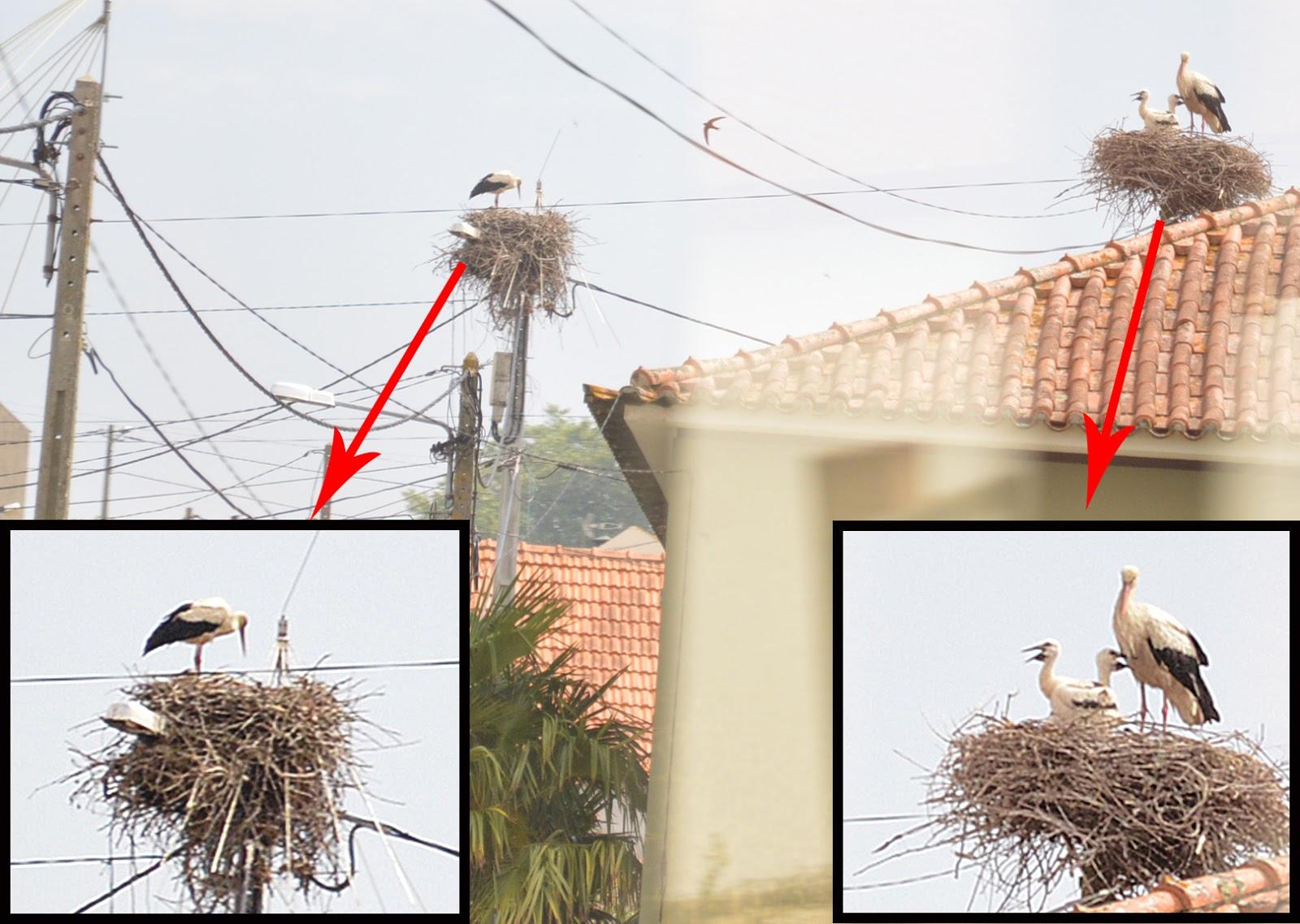 Cegonhas ganham postes exclusivos para sua reprodução