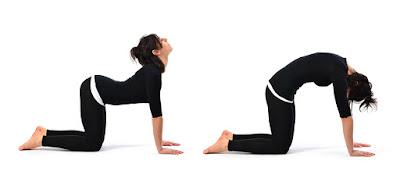 Cat dan cow stretch mampu meningkatkan tinggi badan