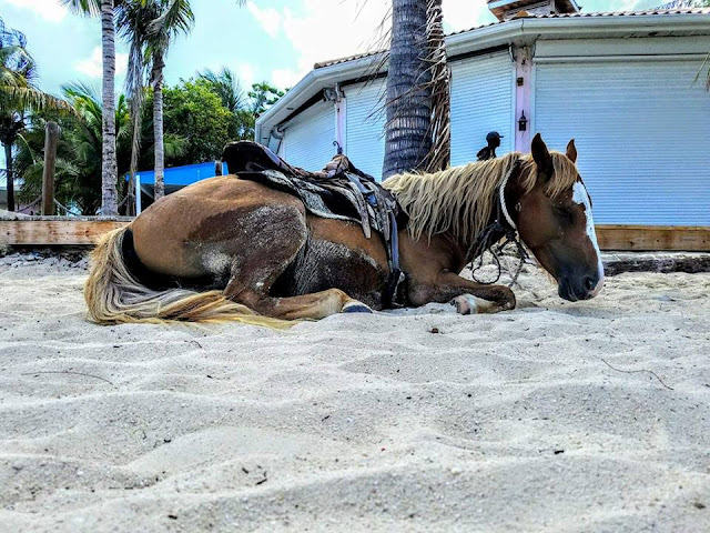 family, animals, chris sharpe pictures, vacation, travel, Grand Turk,