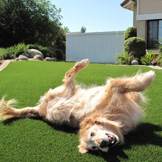 Greatmats artificial grass turf dog agility training