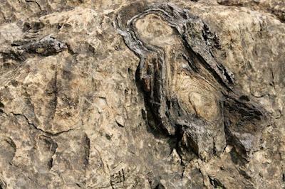 salkhan fossil park