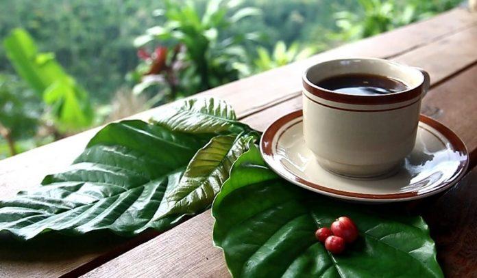 """Bertajuk """"A Cup of Wonderful Lake Toba"""" Kopi Toba Dipamerkan di Korsel"""