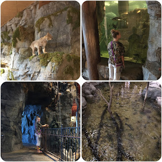 Bass Pro Shops, Water Fall, Bobcat