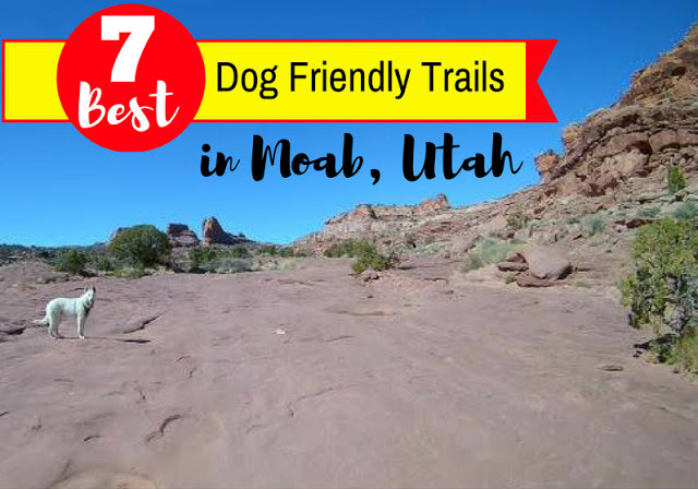 7 Best Dog Friendly Trails in Moab, Hiking in Moab with Dogs