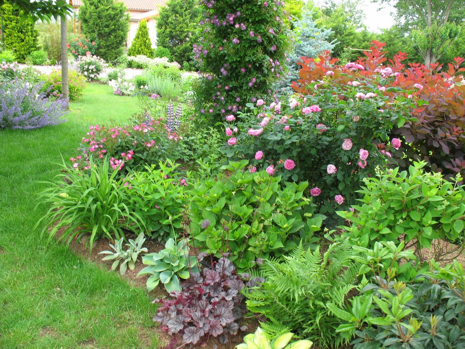 roses du jardin ch neland heuch ra guardian angel. Black Bedroom Furniture Sets. Home Design Ideas