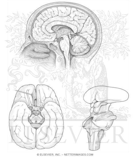 Brain Jack Image: Brain Coloring Book
