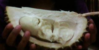 Warso Farm Bogor | Tidak Hanya Sekedar Makan Durian