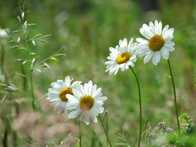 Nhung loai hoa dai dep 5