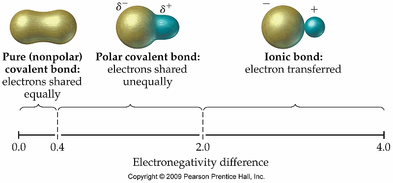 relationship between polar covalent bonds and molecules