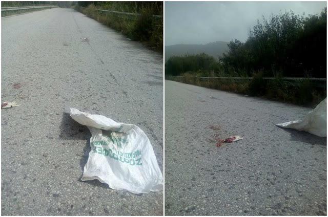 Ηγουμενίτσα: Αποτροπιασμός για τα  κουταβάκια που πετάχθηκαν στο δρόμο (+ΦΩΤΟ)