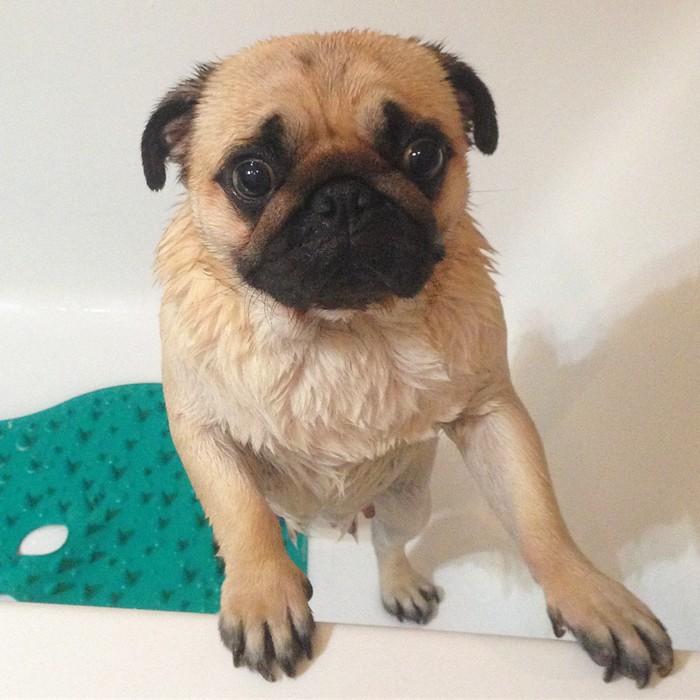Tapis antidérapants pour chiens