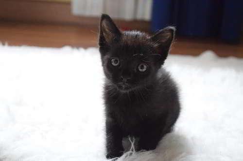 gatitos en adopcion 2