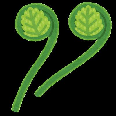 ゼンマイのイラスト(野菜)