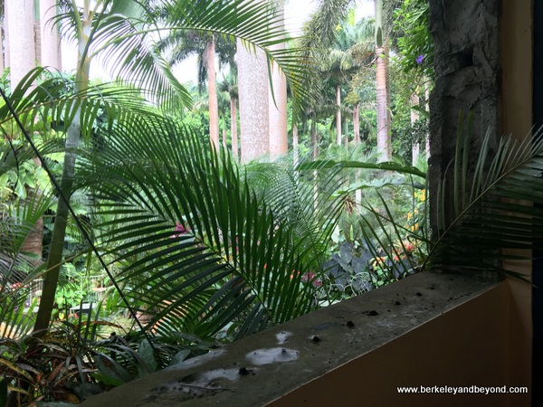 open-air view from loo at Hunte's Gardens in Barbados