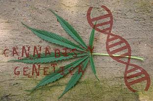 cannabis y genética