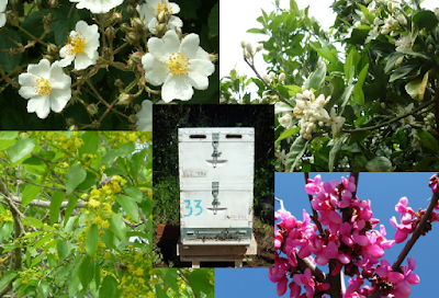 Τι λέει η ζυγαριά Bees Scale την άνοιξη