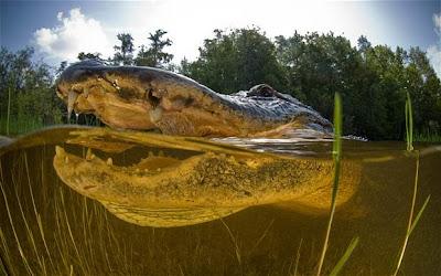 Everglades National Park - Wikipedia  |Everglades National Park Ecosystem