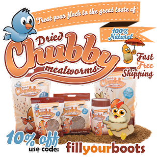 https://www.chubbymealworms.com/pages/chickinboots